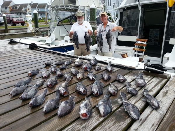 Marauder outer banks fishing charter saltwater fishing for Nc surf fishing calendar