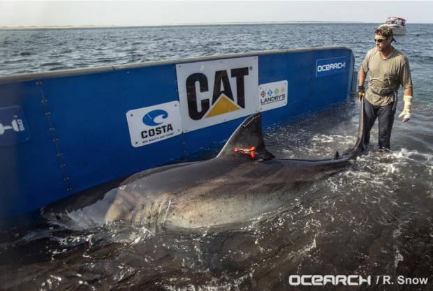 Katharine tagged by OCEARCH